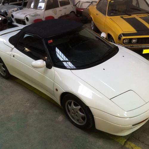 10636 Alquiler Lotus Edan blanco